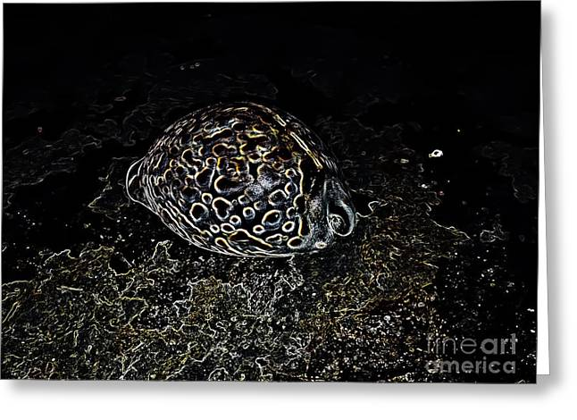 Seashell Picture Digital Greeting Cards - Shiny Cowrie Greeting Card by Heather Joyce Morrill
