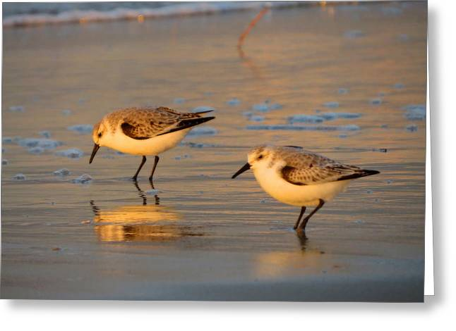 Tern Greeting Cards - Shore Life Greeting Card by Dianne Cowen