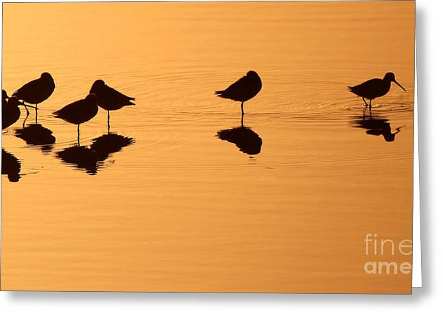 Shorebirds Greeting Cards - Shorebirds On The Sea At Sunrise Greeting Card by Max Allen