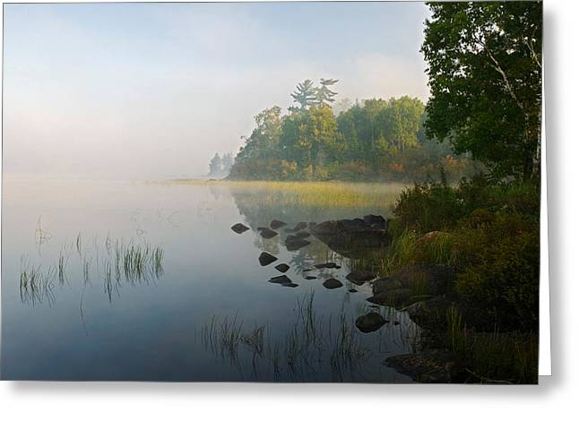 Canoe Greeting Cards - Shoreline Trees And Grasses Along Nina Greeting Card by Panoramic Images