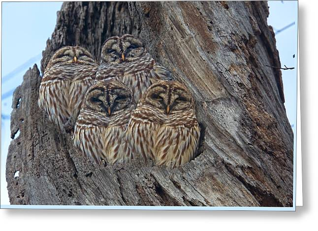 Show Me Your Hooters Greeting Card by Betsy Knapp