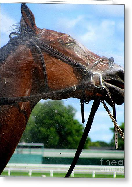 Race Horse Greeting Cards - Shower Me  Greeting Card by Colleen Kammerer