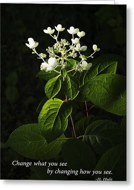 Clever Greeting Cards - Shrub with White Blossoms with Inspirational Text Greeting Card by Donald  Erickson