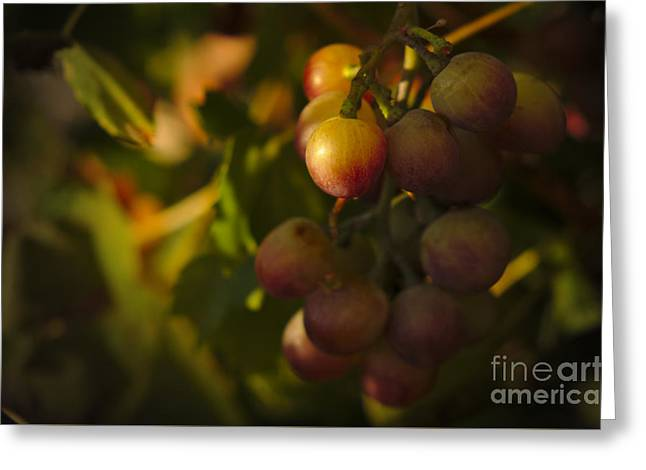 Fuits Greeting Cards - Shy Grapes Greeting Card by Angelo DeVal