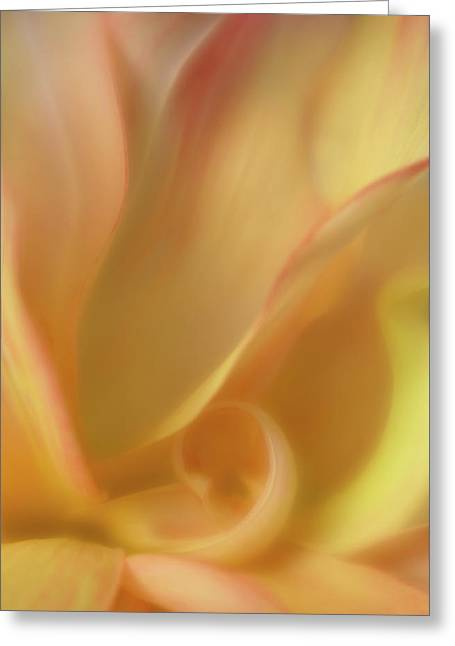 Shy One Greeting Card by Mary Jo Allen