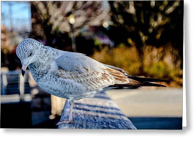 Manhatan Greeting Cards - Shy Sea Eagle  Greeting Card by Micha Dziekonski