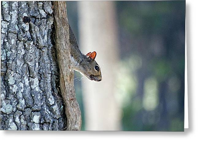 Shy Squirrel Greeting Card by Kenneth Albin