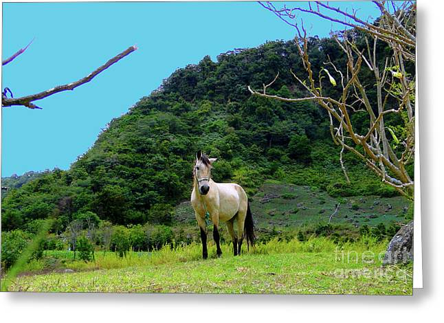 Al Central Greeting Cards - Shy Volcan Filly Greeting Card by Al Bourassa