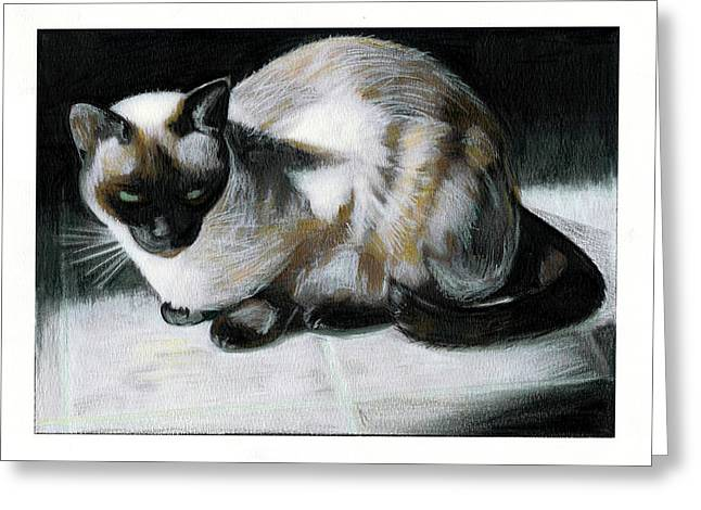 Cat Drawings Greeting Cards - Siamese Cat Greeting Card by Turtle Caps