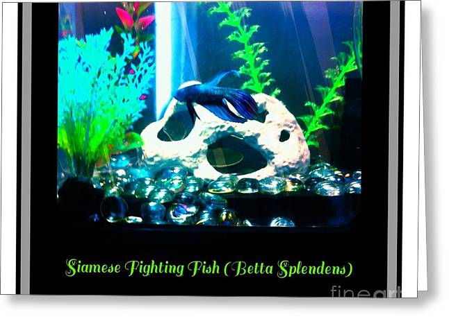 Betta Greeting Cards - Siamese Fighting Fish Greeting Card by Barbara Griffin