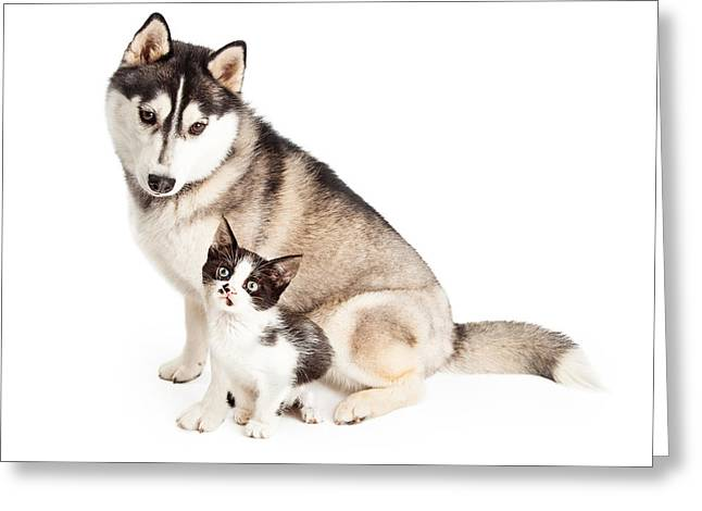 Little Puppy Greeting Cards - Siberian Husky Dog Sitting With Little Kitten Greeting Card by Susan  Schmitz