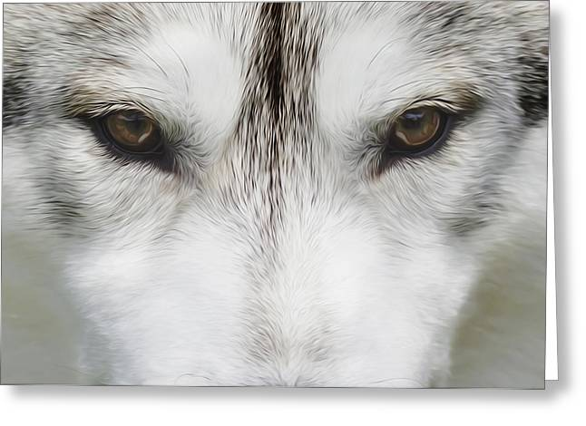 Siberian Husky Dog Art Greeting Cards - Siberian Husky Portrait 2 Greeting Card by Wolf Shadow  Photography