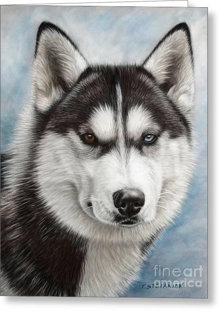 Husky Greeting Cards - Siberian Husky Greeting Card by Tobiasz Stefaniak