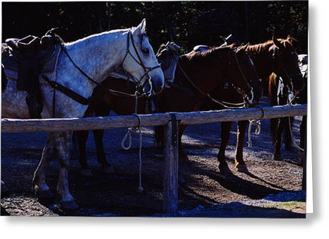Side Profile Of Five Horses, Us Glacier Greeting Card by Panoramic Images