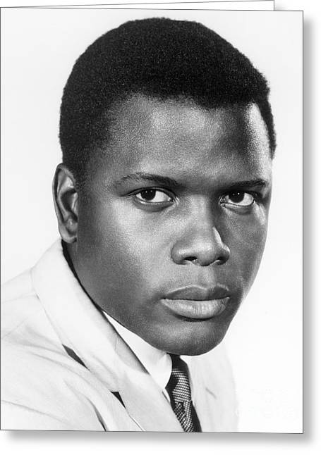 African-american Photographs Greeting Cards - Sidney Poitier (1924-) Greeting Card by Granger