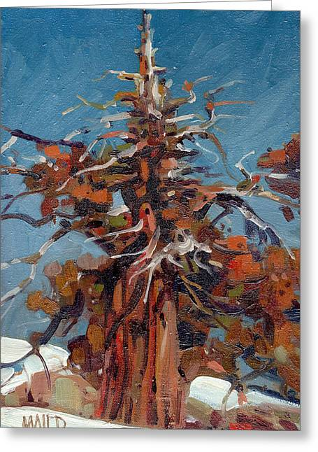 Snow Drifts Greeting Cards - Sierra Juniper Greeting Card by Donald Maier