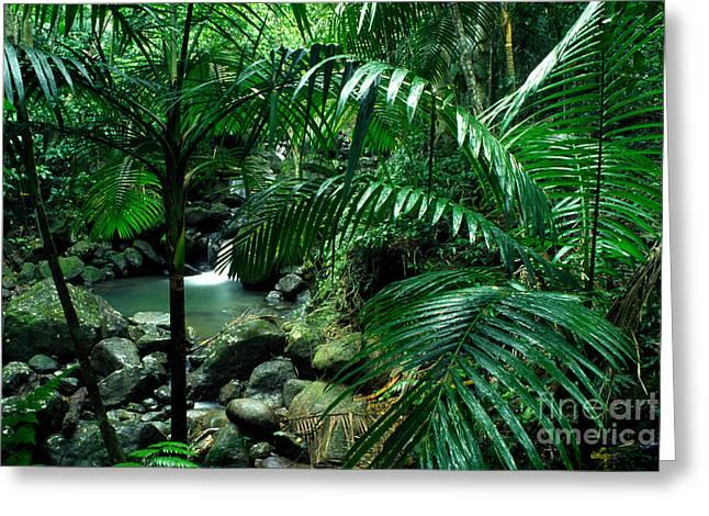 Yunque Greeting Cards - Sierra Palms Waterfall El Yunque Greeting Card by Thomas R Fletcher