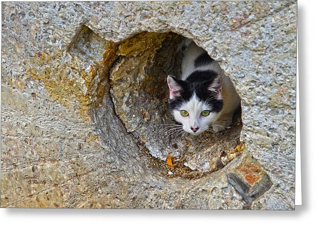 Sifter The Cat Inside Old Millstone Greeting Card by Sandi OReilly