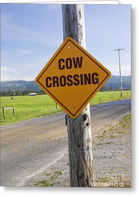 Traffic Sign Greeting Cards - Sign Cow Crossing Greeting Card by Inga Spence