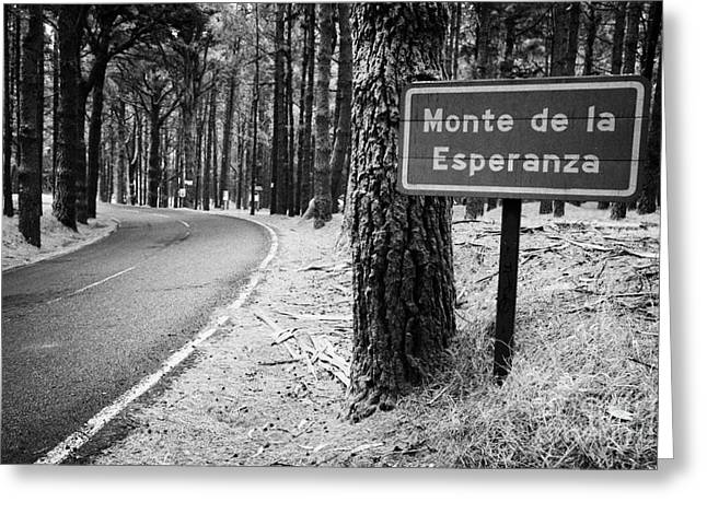 Recently Sold -  - Roadway Greeting Cards - Sign For Monte De La Esperanza At Roadside Beside Tree In Tenerife Canary Islands Spain Greeting Card by Joe Fox