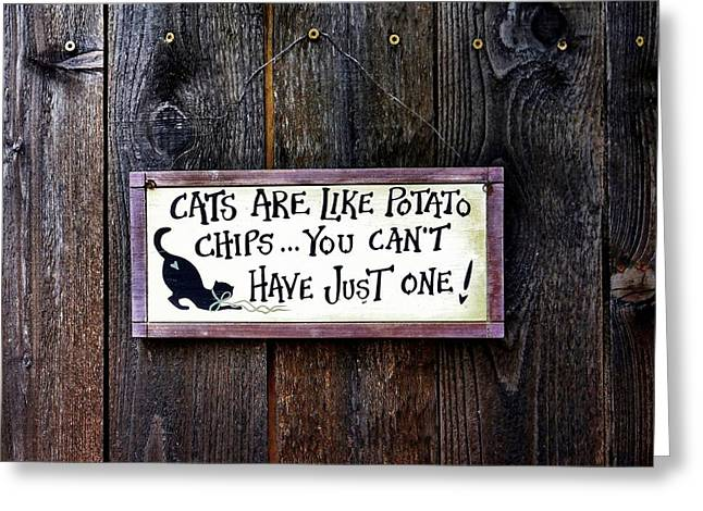 Texting Greeting Cards - Sign of a Cat Lover Greeting Card by Patricia Strand