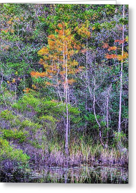 Signs Of Fall In Florida Greeting Card by JC Findley
