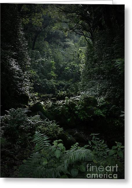 Lush Green Digital Greeting Cards - Silence is Round Me   - Mokulehua Greeting Card by Sharon Mau