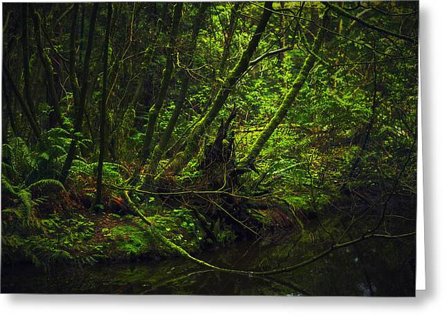 Vine Leaves Greeting Cards - Silent Forest Greeting Card by Stuart Deacon