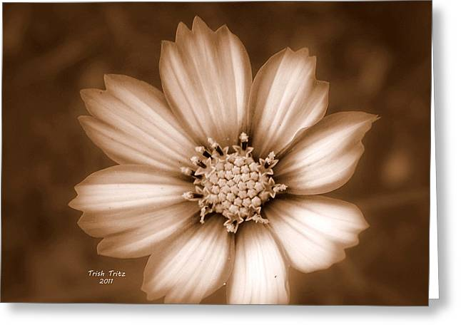 Sepia Flowers Greeting Cards - Silent Petals Greeting Card by Trish Tritz