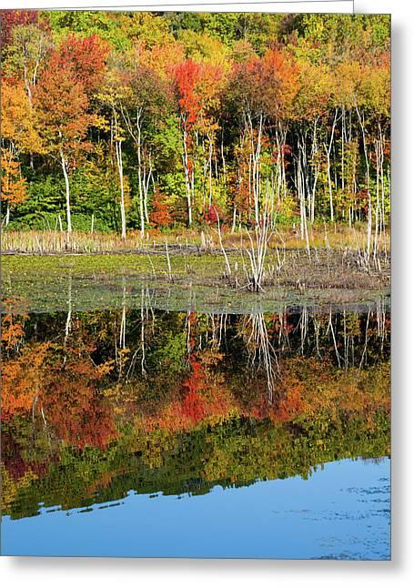 Silent Waters Greeting Card by Karol Livote