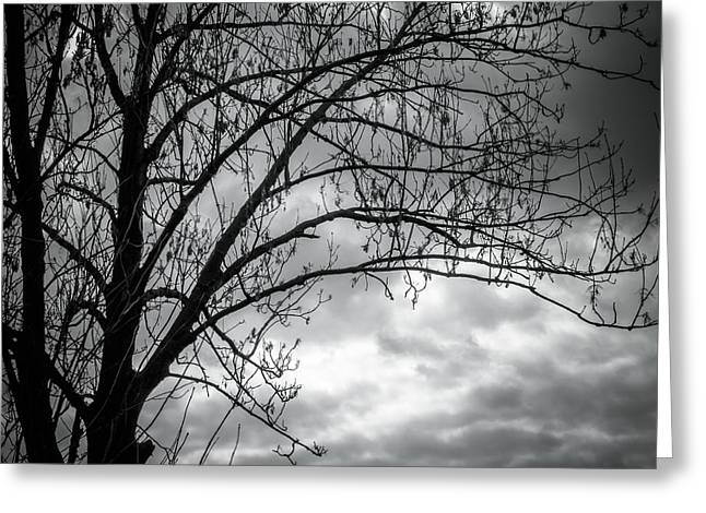 Backlit Greeting Cards - Silhouetree Greeting Card by Wim Lanclus