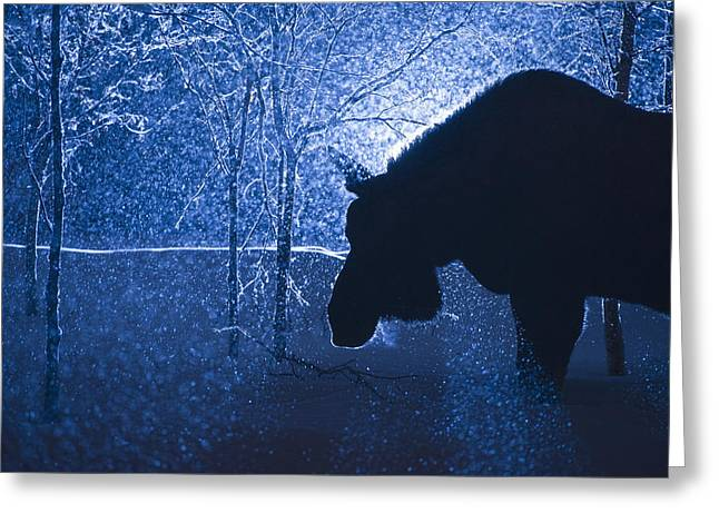 Snowstorm Greeting Cards - Silhouette Of A Moose In A Snowstorm Greeting Card by Dean Blotto Gray