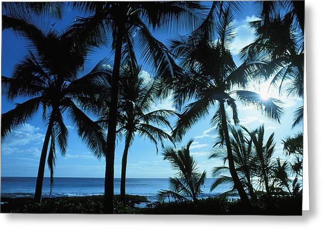 Thin Greeting Cards - Silhouette Of Palms Greeting Card by Dana Edmunds - Printscapes