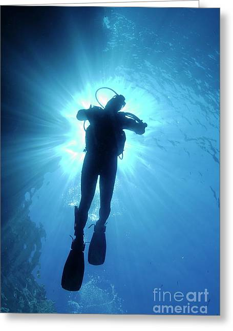 Undersea Photography Greeting Cards - Silhouette of scuba diver rising to surface in sea Greeting Card by Sami Sarkis