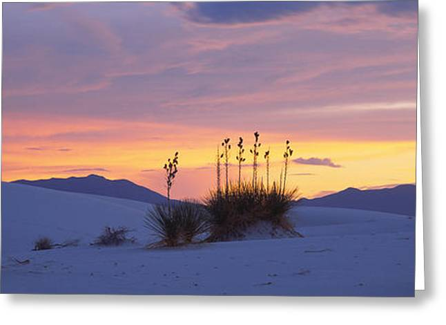 White Sands National Monument Greeting Cards - Silhouette Of Soaptree Yuccas Yucca Greeting Card by Panoramic Images