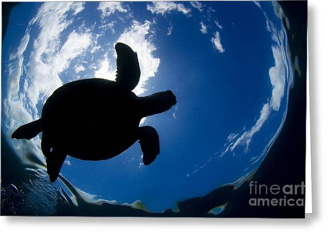 Animal Wisdom Greeting Cards - Silhouette of Turtle Greeting Card by Dave Fleetham - Printscapes