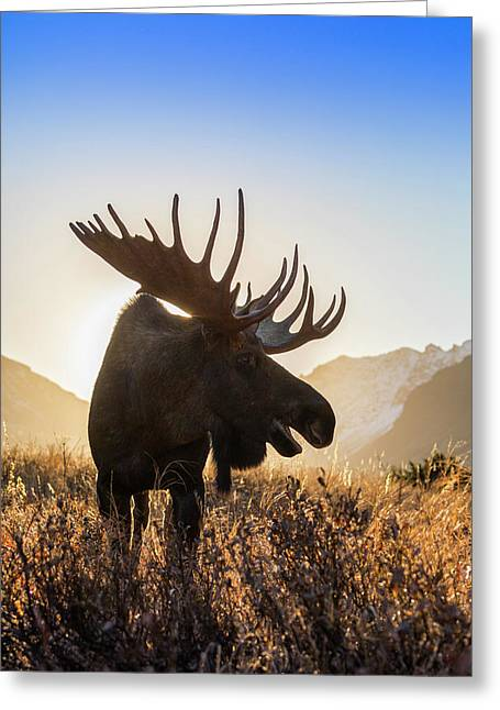 Silhouetted By The Sunrise Greeting Card by Tim Grams