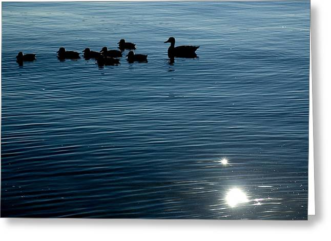 Ducklings Greeting Cards - Silhouetted Duck Family Swims Greeting Card by Todd Gipstein