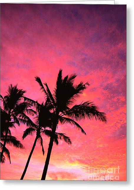 Amazing Sunset Greeting Cards - Silhouetted Palms Greeting Card by Ray Mains - Printscapes