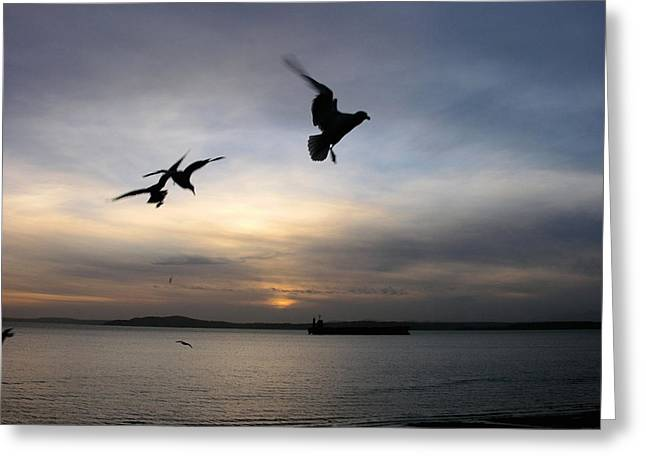 Flying Seagull Greeting Cards - Silhouetted Seagulls Greeting Card by Shirley Stevenson Wallis