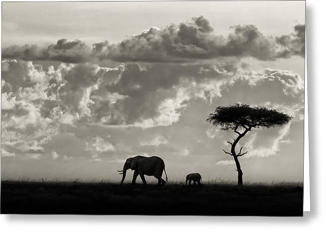 Kenya Greeting Cards - Silhouettes Of Mara Greeting Card by Mario Moreno
