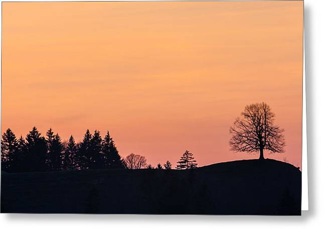 Swiss Photographs Greeting Cards - Silhouettes of trees on a hill in Swiss Alps Greeting Card by Greg Brave