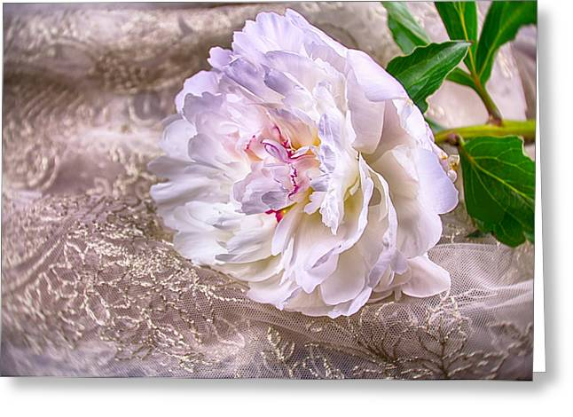 Lace Trim Greeting Cards - Silk White Peony Greeting Card by Daphne Sampson