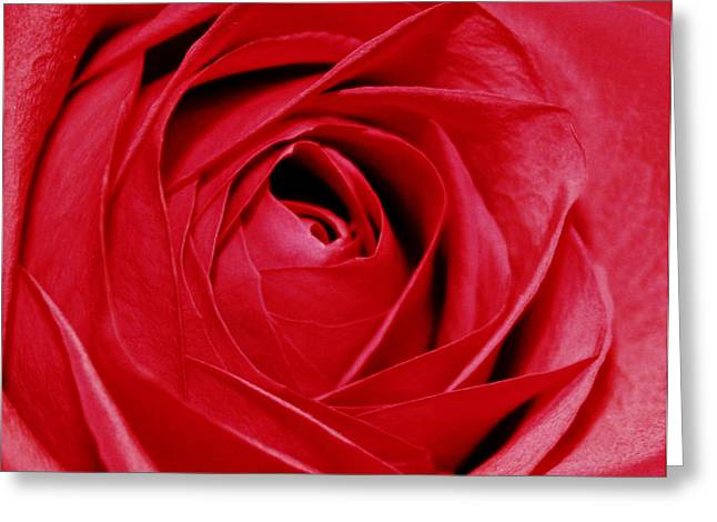 Silky Petals Greeting Card by Cathie Tyler