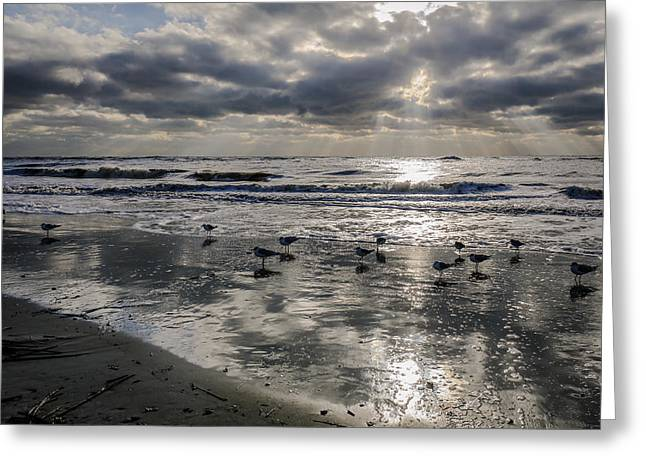 Ocean Shore Greeting Cards - Silver Skies Greeting Card by Donna Macpherson