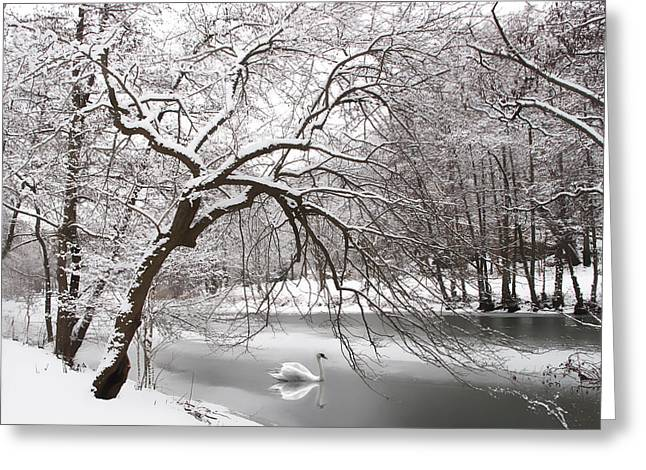 Winter Trees Digital Greeting Cards - Silver Swan Greeting Card by Jessica Jenney