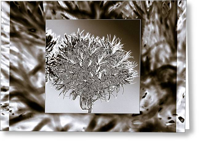 Abstract Nature Greeting Cards - Silver Thistle Greeting Card by Mona Stut