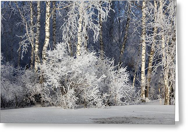 Snow Scene Landscape Greeting Cards - Silver Woods Greeting Card by Victor Kovchin
