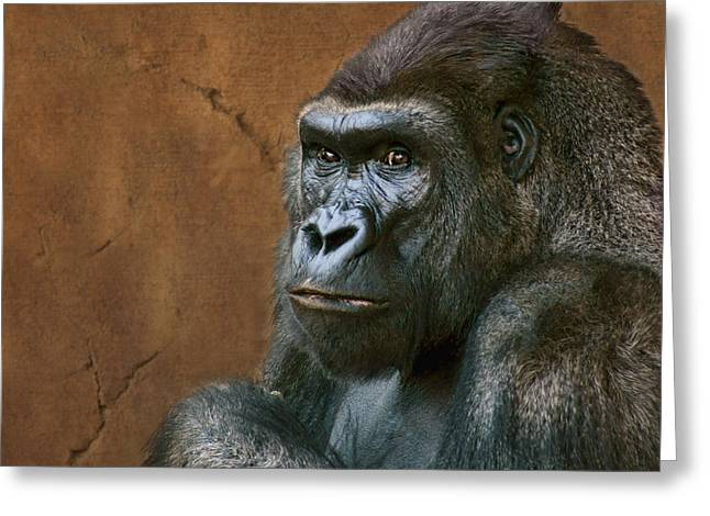 Male Dominated Greeting Cards - Silverback Stare - Gorilla Greeting Card by Nikolyn McDonald