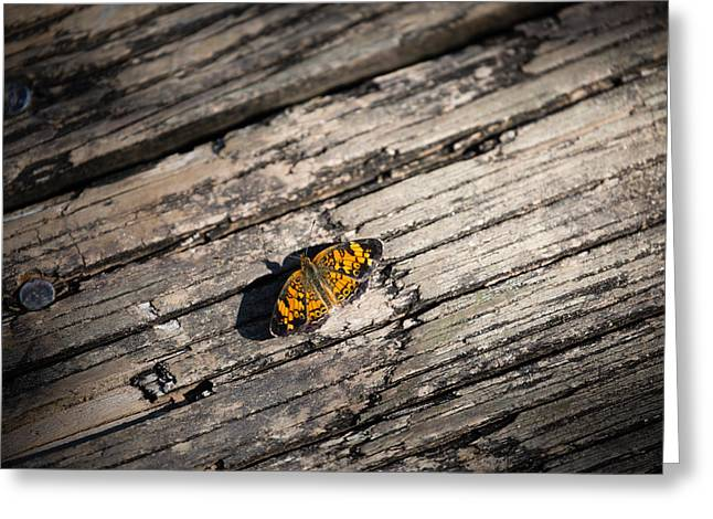 Checkerspot Greeting Cards - Silvery Checkerspot, Chlosyne nycteis Greeting Card by Christy Cox